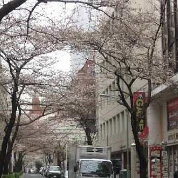 日本留学读本科