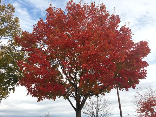 加拿大院校考察行之出行,加拿大的蓝天与红叶