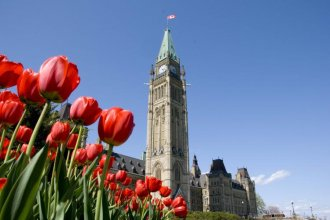 走进加拿大 — 加拿大郁金香节